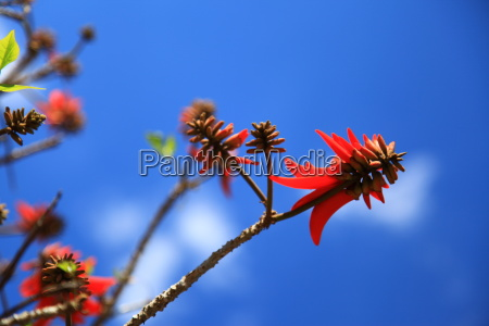 Blume, Blumen, Himmel, Pflanze, Pflanzen, Afrika - 9880850