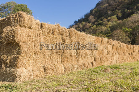 essen nahrungsmittel lebensmittel nahrung landwirtschaftlich industrie