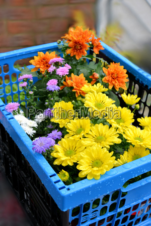 basket with flowers in autumn
