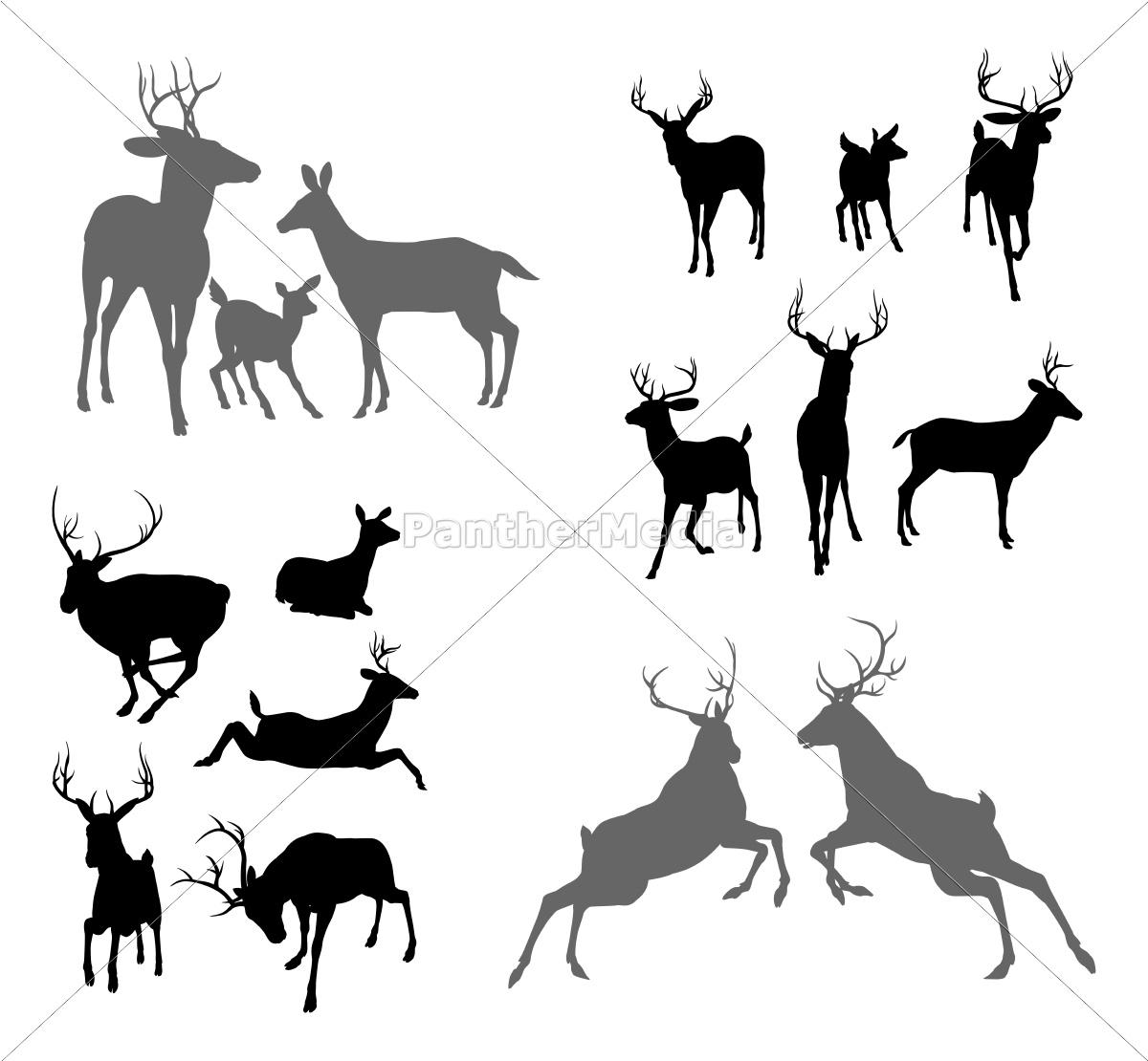 deer hirsch reh und hirschkuh silhouetten stock photo. Black Bedroom Furniture Sets. Home Design Ideas