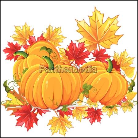 vector ripe pumpkin