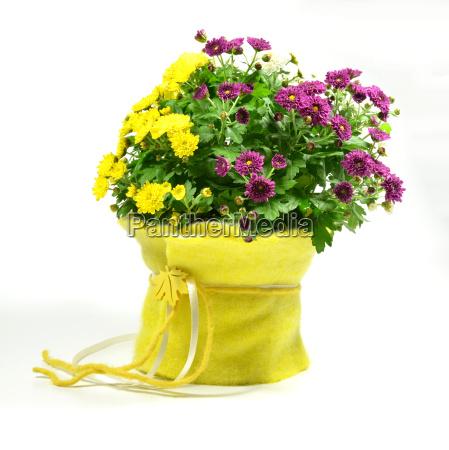 decorated chrysanthemum