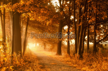 trail in golden autumn sun and
