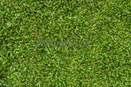 natuerliche gruene wiese