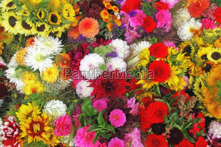 colorful autumn flowers