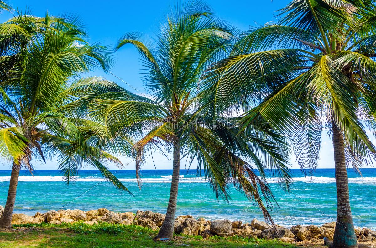 palmenbäume, und, meer - 10091598