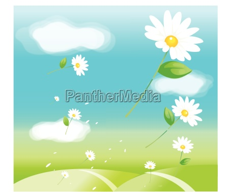 daisy flowers in air