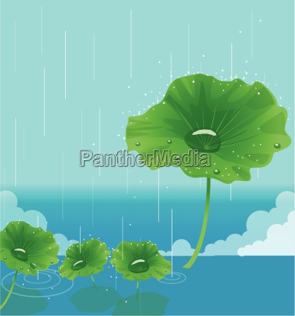 waterdrop on leaves
