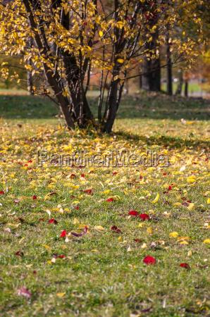 bunte blaetter auf gras