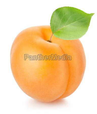 aprikosen, mit, blatt - 10122741