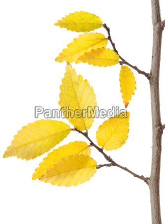 gelbe, herbst, branch - 10124877