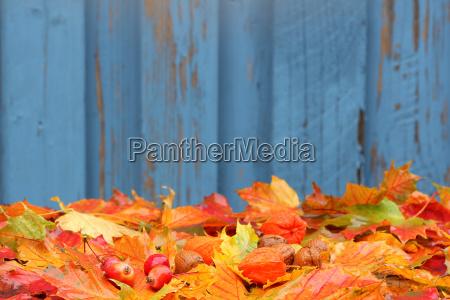 autumn foliage autumn foliage with background