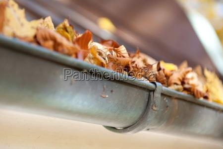 regenwasser rinnen laub dachrinnen regenrinne dachtraufe