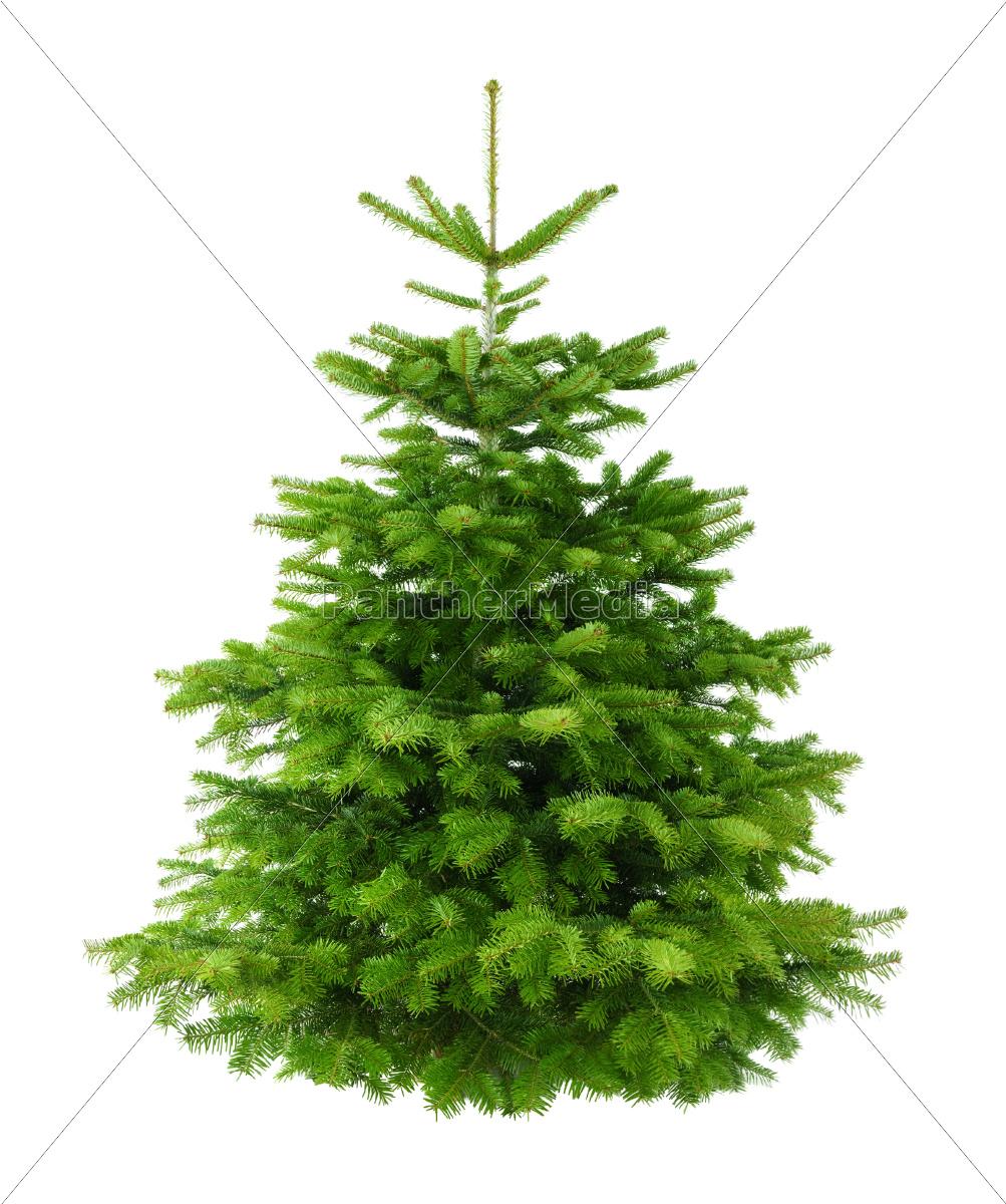 perfekter dichter tannenbaum isoliert ohne schatten stockfoto 10160805 bildagentur. Black Bedroom Furniture Sets. Home Design Ideas