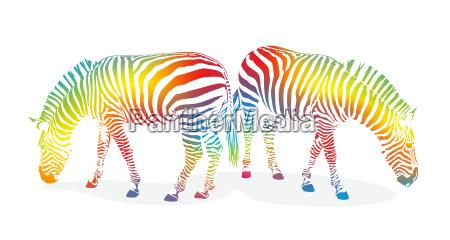zebra1207b