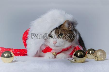 zu weihnachten 2