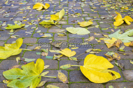 backyard paver patio with fall leaves