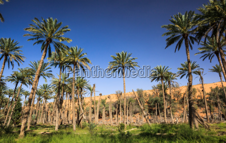 oase inmitten einer wueste oman