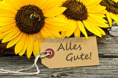 sunflower summer flower all the best