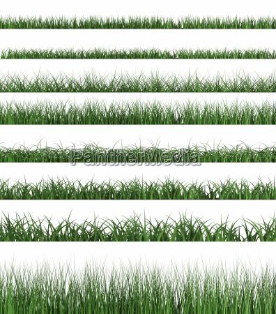 green grass sample