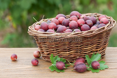 wicker basket with fresh gooseberries