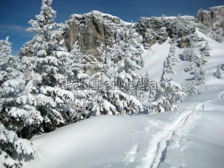 tree trees winter snowy winter landscape