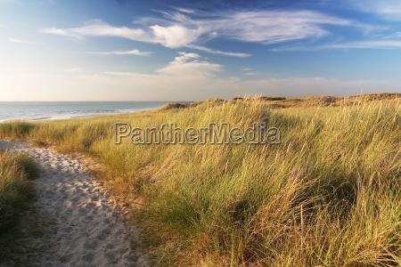 dunes on the beach of sylt