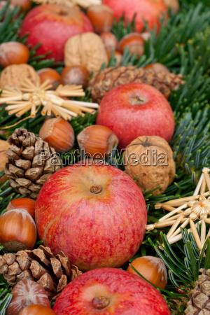 fir fir branch fir branches branch
