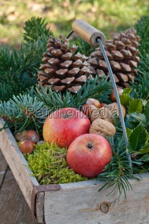 basket baskets fir branch fir branches