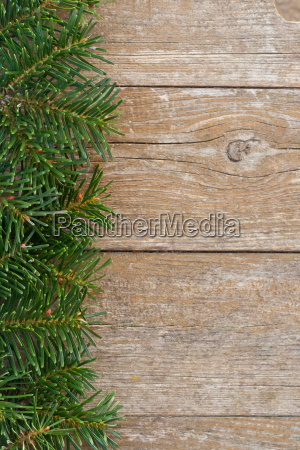 copy space fir fir branch fir