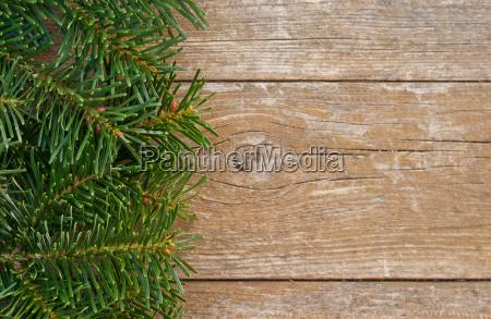 copy space fir fir branch fir