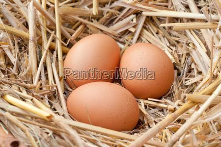 brown easter egg eggs farm food