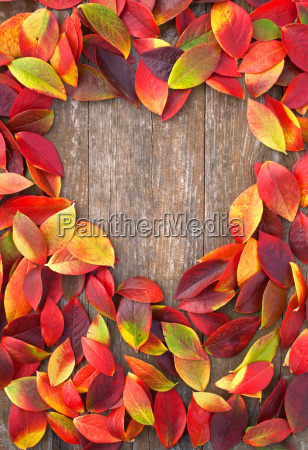 leaf leaves brown yellow orange colorful