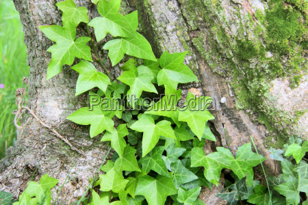 young fern on tree trunk