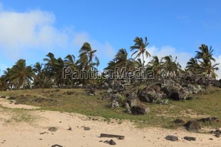 palmenwald osterinsel