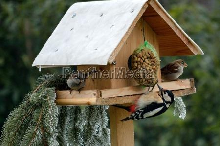 vogelhaus mit buntspecht