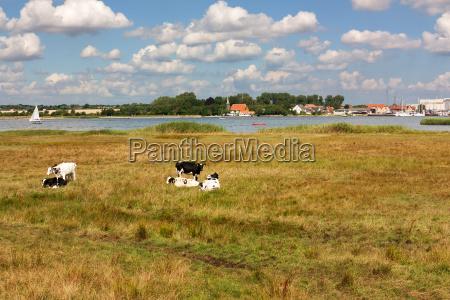grassland on the shore of schlei