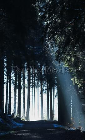lichtstrahl