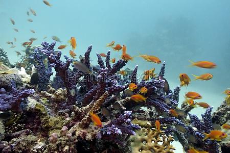 fisch unterwasser exotisch kunstspringen tauchend unterwasser