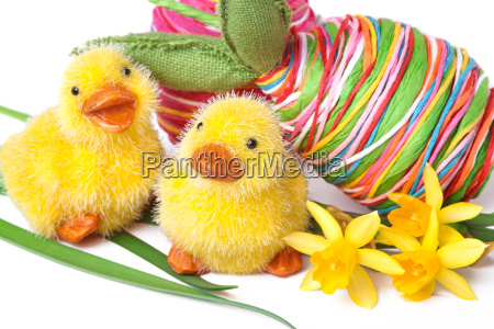 chick with colored eggs easter