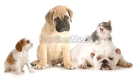 hunde und katzenkampf