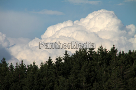 clouds over spruce forest
