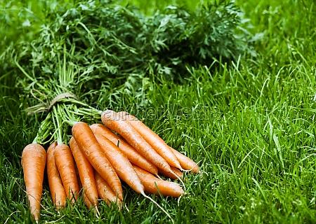 haufen frischer orangenkarotten auf gruenem gras