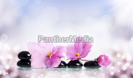 black spa stones and flower on