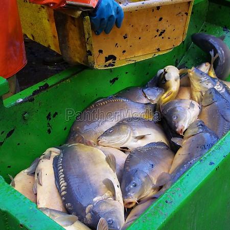 abfischen to fish dry 12