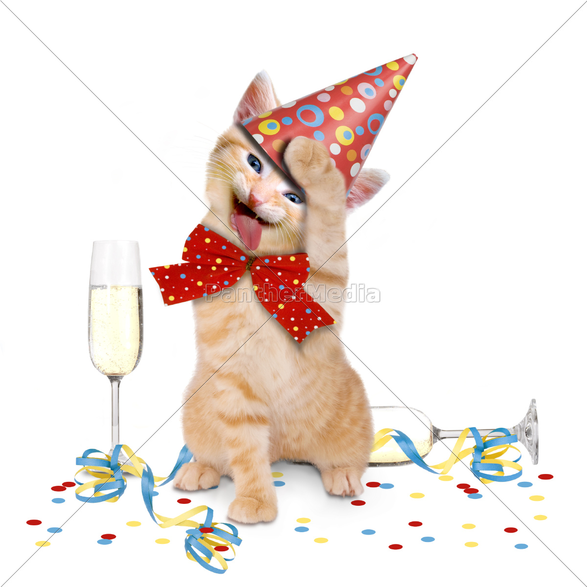 Happy Birthday Funny Cat Dog Quotes And Images