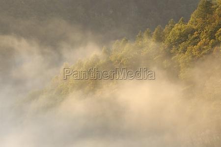 fahrt reisen baum vertraeumt nebel sonnenaufgang