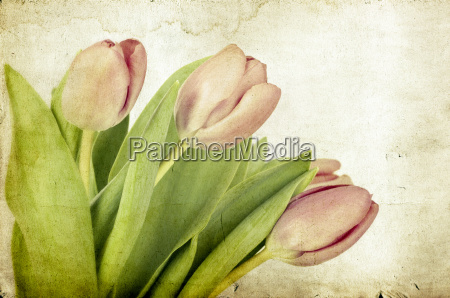 red tulips over painted background