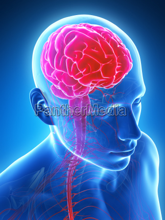 3d rendered illustration male brain