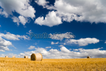agriculture farming field summer summerly straw